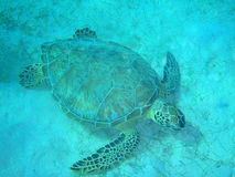 Tortuga en el fondo del mar Foto de archivo libre de regalías