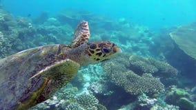 Tortuga en el mar almacen de video