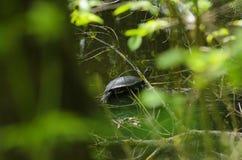 Tortuga en la hierba Fotografía de archivo libre de regalías