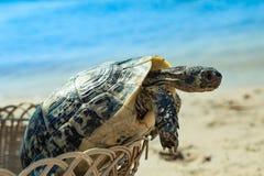Tortuga en la playa arenosa Fotos de archivo