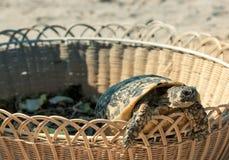 Tortuga en la playa arenosa Imagen de archivo libre de regalías