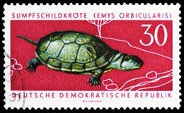 Tortuga europea de la charca (orbicularis) de Emys, serie protegido de los animales, circa 1963 imágenes de archivo libres de regalías