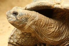 Tortuga gigante Imagen de archivo