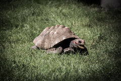 Tortuga gigante Imagenes de archivo