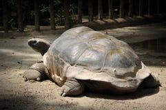 Tortuga gigante en el parque zoológico de Singapur Fotos de archivo