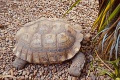 Tortuga gigante hermosa imagen de archivo