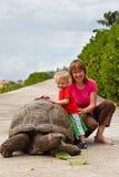 Tortuga gigante que introduce Imagen de archivo