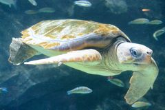 Tortuga II Imagenes de archivo