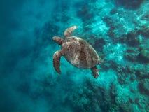 Tortuga, isla Sabah, Malasia del mabul foto de archivo libre de regalías