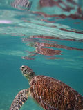 Tortuga marina Imagenes de archivo