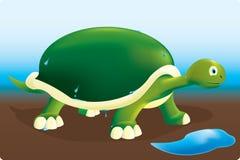 Tortuga mojada stock de ilustración