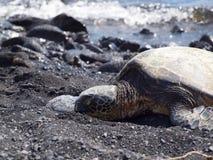 Tortuga que miente en una playa/una Hawaii negras de la arena Imagenes de archivo