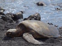 Tortuga que miente en una playa/una Hawaii negras de la arena Fotos de archivo libres de regalías