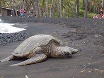 Tortuga que miente en una playa/una Hawaii negras de la arena Fotografía de archivo libre de regalías