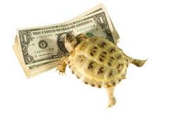 Tortuga que se arrastra en dólares imagen de archivo libre de regalías