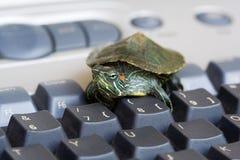 tortuga Rojo-espigada del resbalador Fotografía de archivo libre de regalías