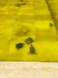 Tortuga, tortuga del agua Imagen de archivo libre de regalías