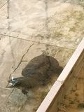 Tortuga, tortuga del agua Foto de archivo libre de regalías