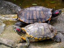 Tortuga tropical Imagen de archivo libre de regalías