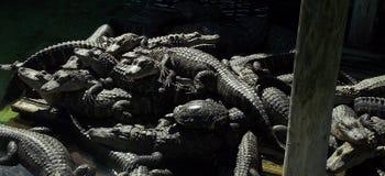 Tortuga y cocodrilos Fotos de archivo