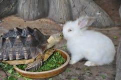 Tortuga y conejo Foto de archivo libre de regalías