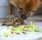Tortuga y perro Fotografía de archivo libre de regalías
