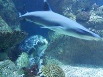 tortuga y tiburón del ‹del †del ‹del †del mar fotos de archivo libres de regalías