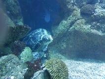 tortuga y tiburón del ‹del †del ‹del †del mar imagen de archivo libre de regalías