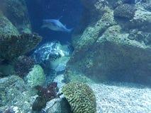 tortuga y tiburón del ‹del †del ‹del †del mar imagenes de archivo
