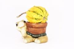 Tortuga y una calabaza Foto de archivo
