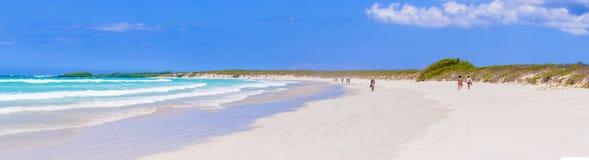 Tortuga zatoki plaża przy Santa Cruz wyspą w Galapagos fotografia stock