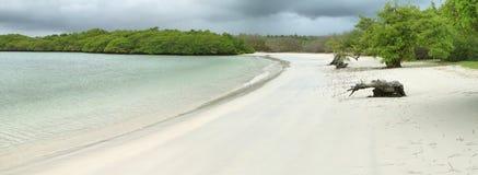 Tortugabaai, Santa Cruz, de Galapagos royalty-vrije stock foto's