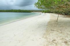 Tortugabaai, Santa Cruz, de Galapagos stock foto