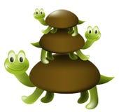 Tortugas Foto de archivo libre de regalías