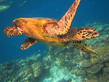 tortugas Imágenes de archivo libres de regalías