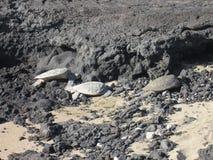 Tortugas de mar Imagenes de archivo