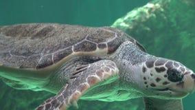 Tortugas de mar que nadan en agua almacen de video