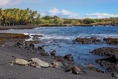 Tortugas de mar verde en la playa negra de la arena Foto de archivo libre de regalías