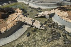 Tortugas en acuario Fotos de archivo