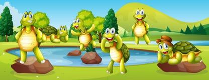 Tortugas en escena de la charca ilustración del vector