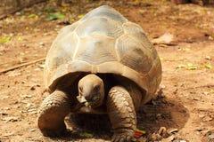 Tortugas que se arrastran en la naturaleza Foto de archivo libre de regalías