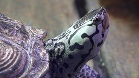 Tortugas, tortugas, reptiles, animales, fauna almacen de video