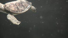 Tortugas, tortugas, reptiles, animales, fauna metrajes