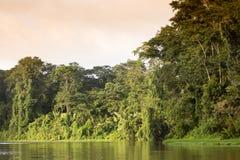 Tortuguero, Коста-Рика Стоковое Фото