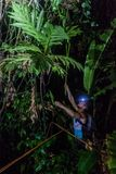 TORTUGUERO, COSTA RICA - MAY 15, 2016: Biologist is looking for night active amphibians in a jungle near Tortuguero. Costa Rica royalty free stock photos