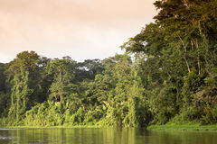Tortuguero, Costa Rica. Tortuguero National Park, Costa Rica, view of the rainforest from a boat in the canals stock photo