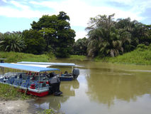 Tortuguero Nationaal Park Stock Afbeeldingen