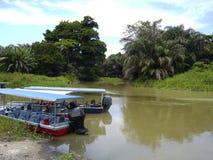 Tortuguero National Park stock images