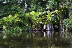 Tortuguero river Royalty Free Stock Photo