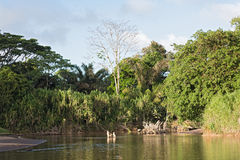 The Tortuguero River in the north east of Costa Rica.  royalty free stock photos